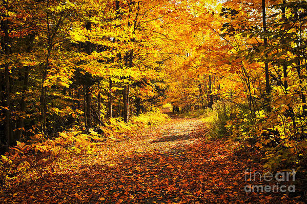 Fall Art Print featuring the photograph Fall Forest by Elena Elisseeva