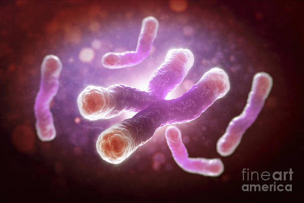 Close Up Art Print featuring the photograph Telomeres by Science Picture Co