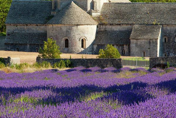 Abbaye Art Print featuring the photograph Abbaye De Senanque by Brian Jannsen