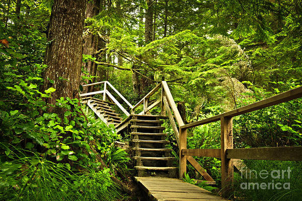Rainforest Print featuring the photograph Path In Temperate Rainforest by Elena Elisseeva