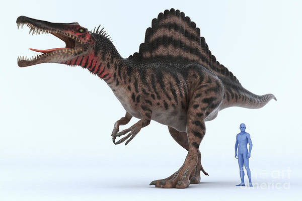 3d Visualisation Art Print featuring the photograph Dinosaur Spinosaurus by Science Picture Co