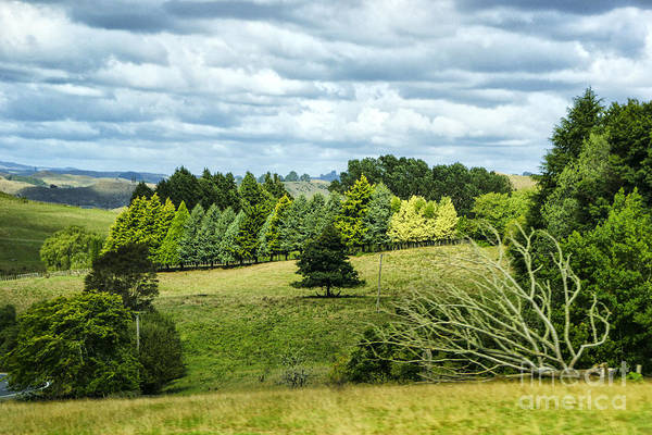 Newzealnd Landscapes Argriculture Farmland Green Trees Shades Of Green Art Print featuring the photograph A Copse Of Trees by Rick Bragan