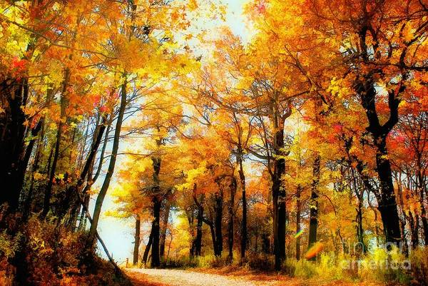 Autumn Leaves Art Print featuring the photograph A Golden Day by Lois Bryan