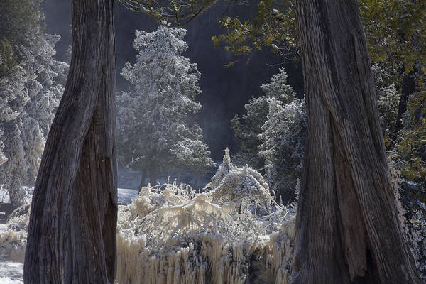 north Woods fairy Tale gooseberry Falls gooseberry River lake Superior minnesota northern Minnesota north Shore river spring Melt spring cedars river Spray ice woods magical magnificent wow nature greeting Cards mary Amerman Art Print featuring the photograph A Twisted Fairy Tale by Mary Amerman