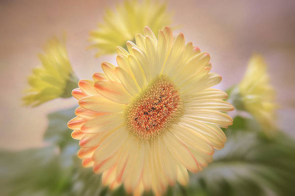 Flowers Canvas Art Print featuring the photograph A Touch Of Sunshine by Fiona Messenger