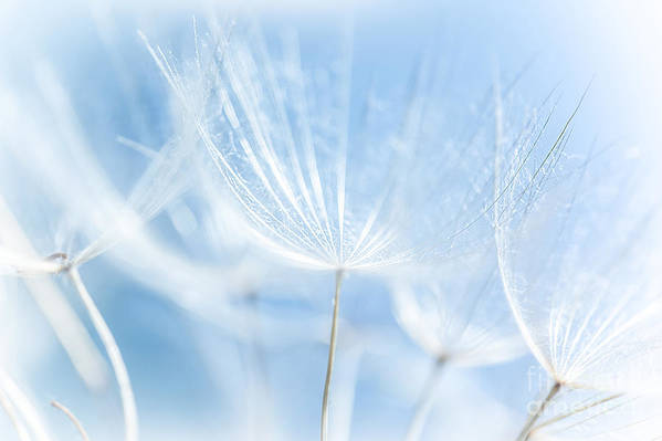 Abstract Art Print featuring the photograph Abstract Dandelion Background by Anna Om
