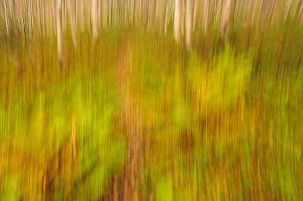 Abstract Art Print featuring the photograph Abstract Forest Scenery by Gry Thunes