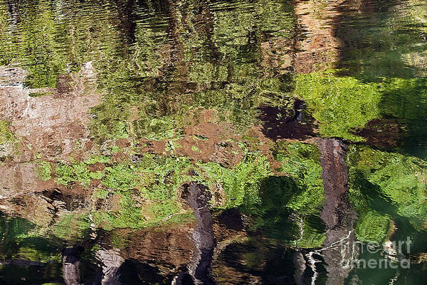 Kate Brown Art Print featuring the photograph Abstracted Reflection by Kate Brown