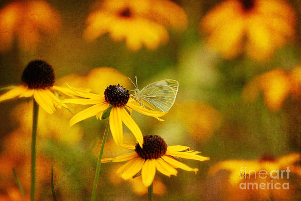 Butterfly Art Print featuring the photograph Abundance by Lois Bryan