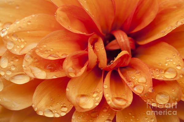 Abstract Art Print featuring the photograph After The Rain by Anne Gilbert