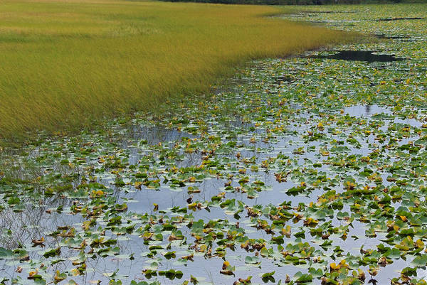 Water Lilies Art Print featuring the photograph Alaska - Lily Pond And Marshy Meadow by Scott Lenhart
