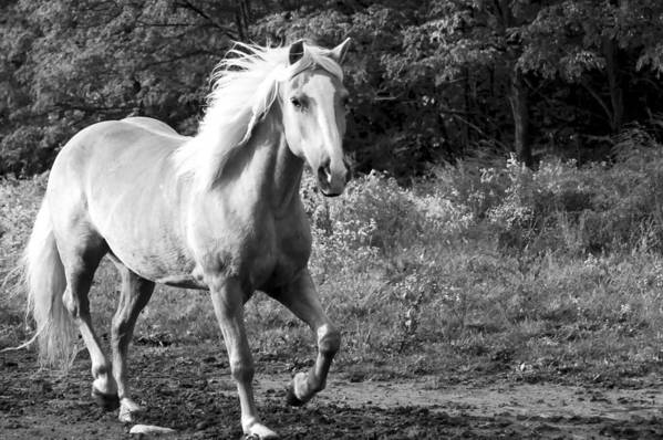 Horse Art Print featuring the photograph All Charm by Annette Persinger
