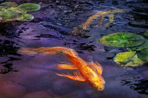 Savad Art Print featuring the photograph Animal - Fish - There's Something About Koi by Mike Savad