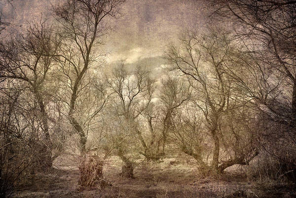 Landscapes Art Print featuring the photograph Arms Ghost Forest by Guido Montanes Castillo