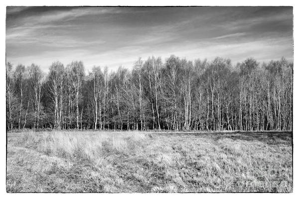 Ashdown Forest Print featuring the photograph Ashdown Forest Trees In A Row by Natalie Kinnear