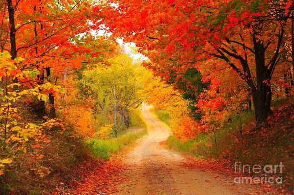 Autumn Art Print featuring the photograph Autumn Cameo Road by Terri Gostola