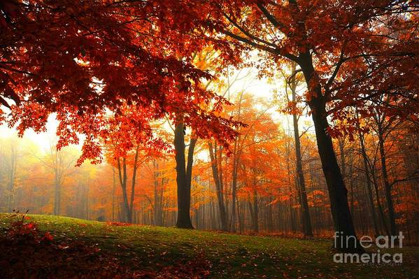 Autumn Art Print featuring the photograph Autumn Canopy by Terri Gostola