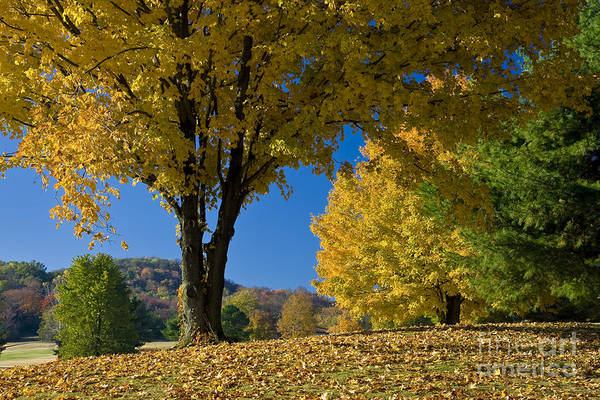 Autumn Art Print featuring the photograph Autumn Colors by Brian Jannsen