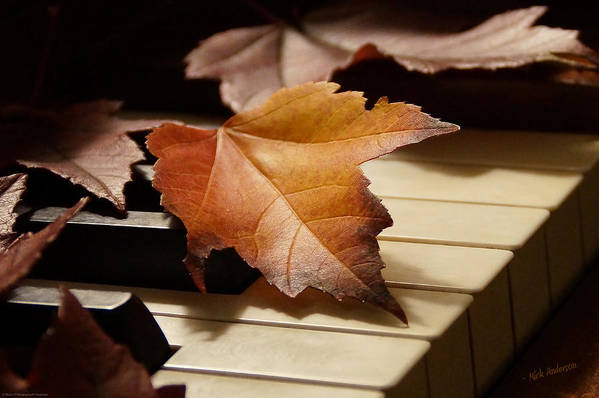 Autumn Art Print featuring the photograph Autumn Piano 13 by Mick Anderson