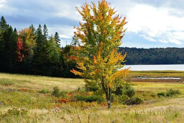 Autumn Art Print featuring the photograph Autumn Shores Of Maine by Lena Hatch