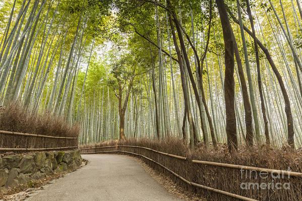 Arashiyama Art Print featuring the photograph Bamboo Forest Arashiyama Kyoto Japan by Colin and Linda McKie