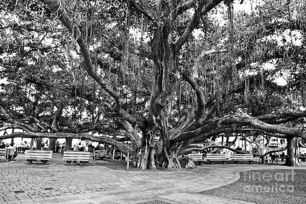 Banyan Tree Art Print featuring the photograph Banyan Tree by Scott Pellegrin
