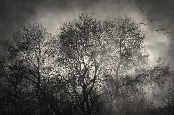 Trees Art Print featuring the photograph Beyond The Morning by Taylan Apukovska