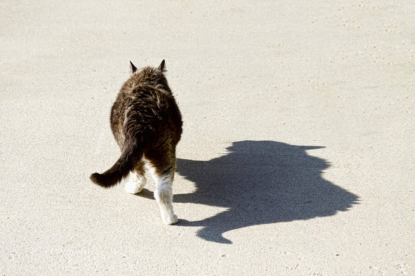 Cat Art Print featuring the photograph Big Cat Ferocious Shadow by James BO Insogna