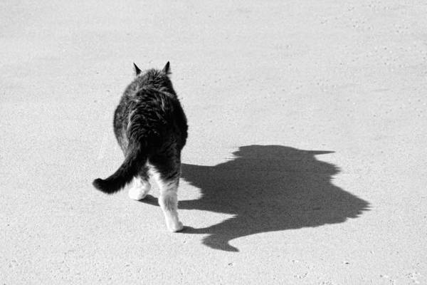 Cat Art Print featuring the photograph Big Cat Ferocious Shadow Monochrome by James BO Insogna