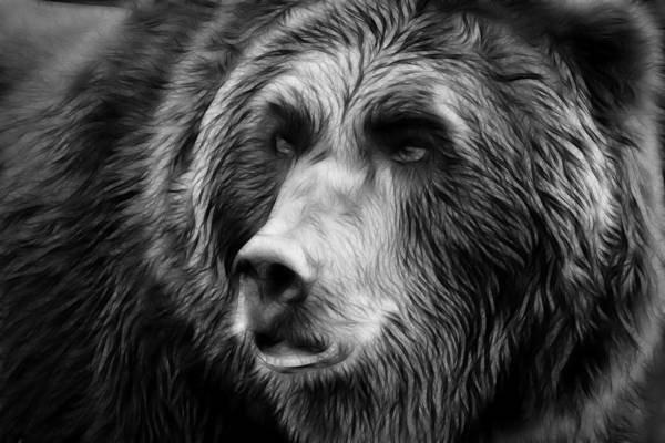 Black And White Photography Bear