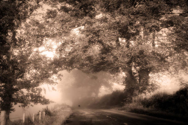 Scotland Art Print featuring the photograph Black Dog On A Misty Road. Misty Roads Of Scotland by Jenny Rainbow