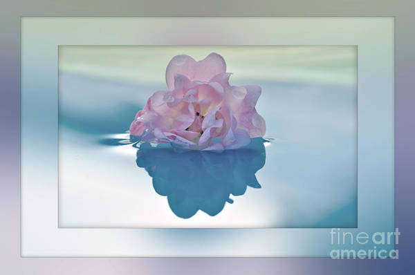 Photography Print featuring the photograph Blend Of Pastels by Kaye Menner