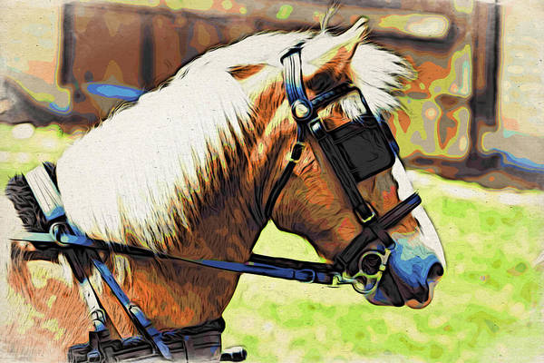 Horse In Blinders Art Print featuring the photograph Blinders by Alice Gipson