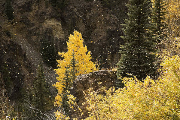 Aspen Art Print featuring the photograph Blowing In The Wind by Rich Ernst