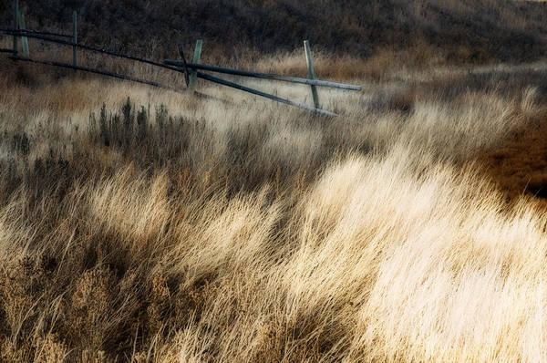 Tall Grass Art Print featuring the photograph Blown Away by Peter Olsen