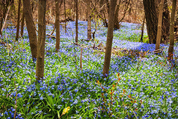 Flowers Print featuring the photograph Blue Flowers In Spring Forest by Elena Elisseeva