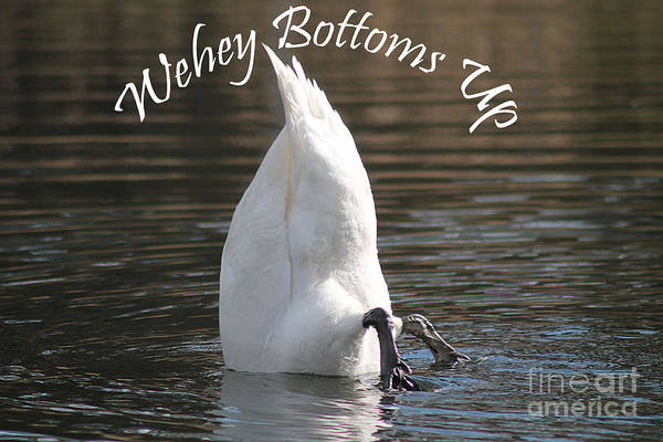 Swan Art Print featuring the photograph Bottoms Up by Michelle Orai