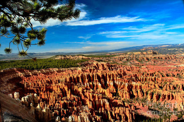 Rock Formations Art Print featuring the photograph Bryce by Robert Bales