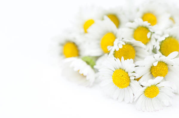 Floral Art Print featuring the photograph Bunch Of Daisies by Anne Gilbert