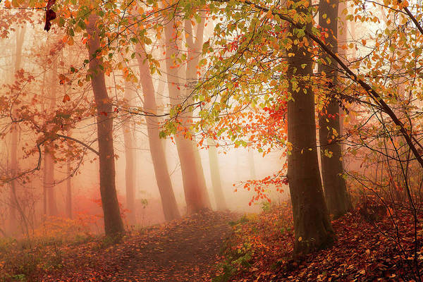 Forest Art Print featuring the photograph Calm Walk In Colors. by Leif L??ndal