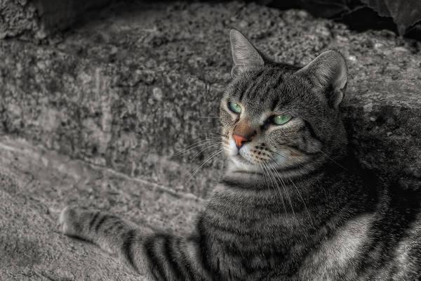 Art Print featuring the photograph Cat Bicolored by Leonardo Marangi