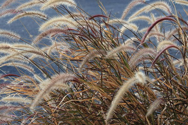 Nature Art Print featuring the photograph Cat-tails by TJ OHare