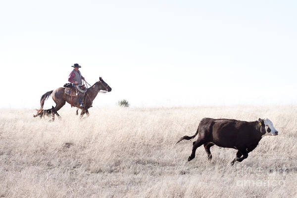 Cowboy Art Print featuring the photograph Cattle Drive by Cindy Singleton
