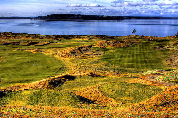 Chambers Bay Golf Course Art Print featuring the photograph Chambers Bay Lone Tree by David Patterson