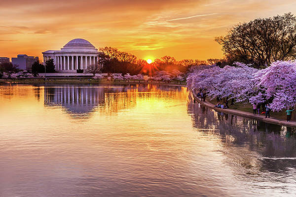 Tidal Basin Art Print featuring the photograph Cherry Blossom Sunrise On The Tidal by Kevin Voelker Photography