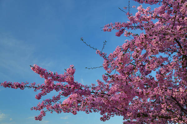 Architectural Art Print featuring the photograph Cherry Blossoms 2013 - 037 by Metro DC Photography