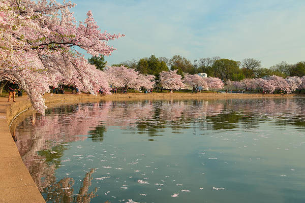 Architectural Art Print featuring the photograph Cherry Blossoms 2013 - 083 by Metro DC Photography