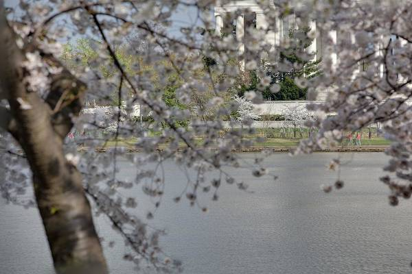 America Art Print featuring the photograph Cherry Blossoms With Jefferson Memorial - Washington Dc - 011336 by DC Photographer