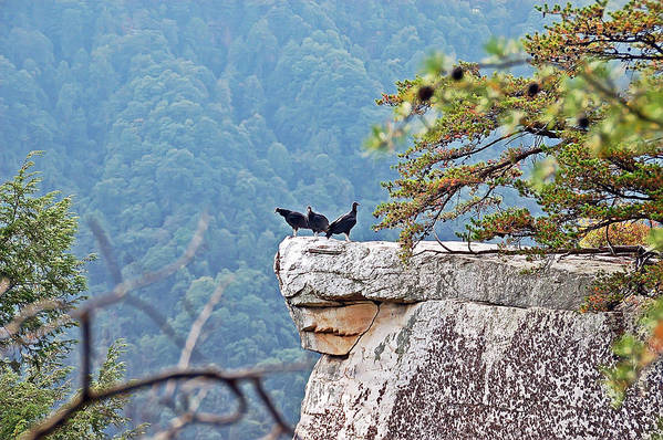 Bird Art Print featuring the photograph Cliff Hanging by Aimee L Maher ALM GALLERY