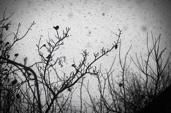 Silhouette Art Print featuring the photograph Confusing In The Snow by Taylan Apukovska